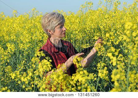 Agronomist or farmer examine blooming canola field rapeseed plant using tablet
