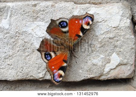 a beautiful example of butterfly landed on a stone