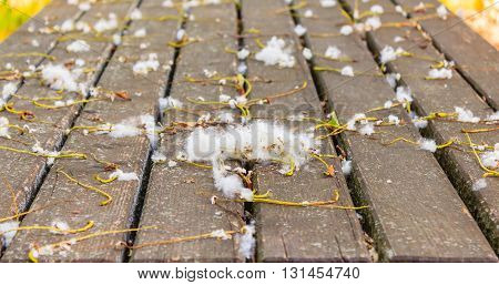 an expanse of pollen on a wooden board in a park during spring