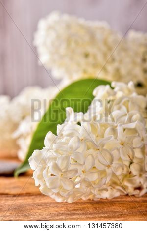 White Lilac Blooms With Single Green Leaf On Wooden Board