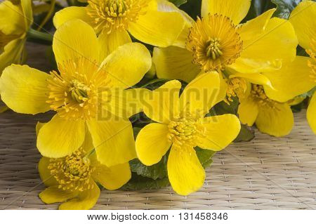 Bouquet from first spring colour with orange petal rests upon table