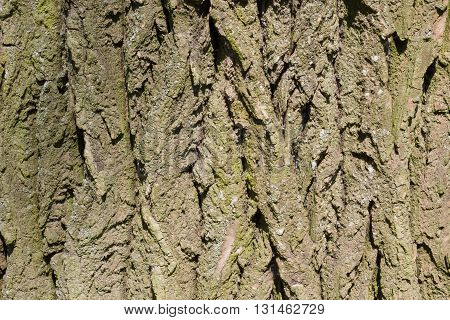 Bark of Tree. Close-up relief for Background