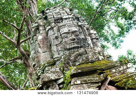 Old temples in the jungle Angkor Siem Reap Cambodia