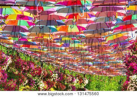 Colorful Umbrellas In Dubai Miracle Garden