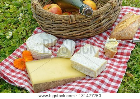 several French cheese with apples and cider on grass