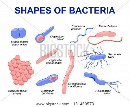 Common bacteria infecting human. vector illustration Bacteria are classified into 5 groups according to their basic shapes: spherical (cocci) rod (bacilli) spiral (spirilla) comma (vibrios) or corkscrew (spirochaetes).