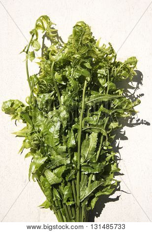 Diplazium esculentum or edible vegetable fern found in Asia and Oceania.