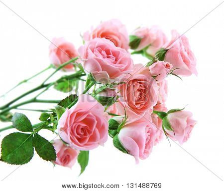 Bouquet of fresh roses isolated on white