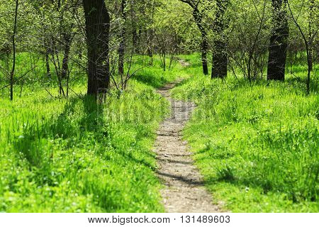 Footpath in the green wood with trees and grass