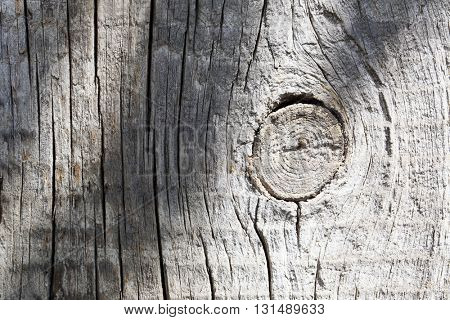 Wood tree texture background