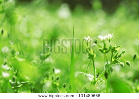 Grass with wildflowers, close up