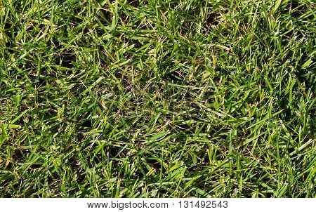 Sloping green lawn closeup top. natural light, a top view