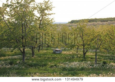 A bee hive box sits in a orchard on Old Mission Peninsula, Michigan