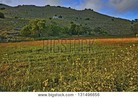Rural landscape of mountain of Lefkada with meadow with poppies,  Ionian Islands, Greece