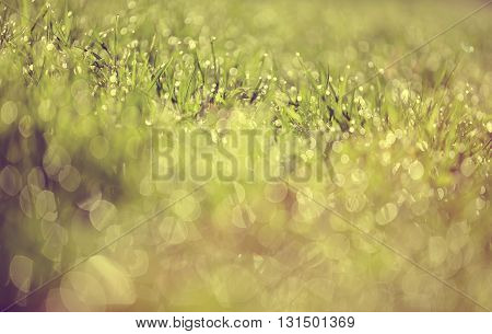 Abstract Blurred background from a wet green grass in dew drops
