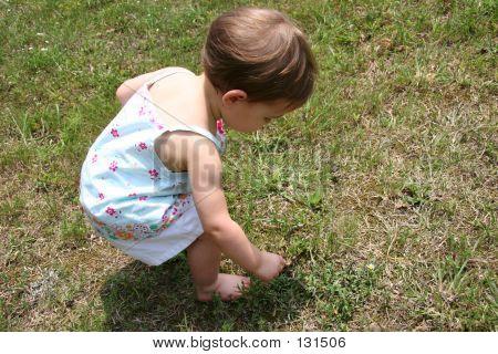 Picking Weeds