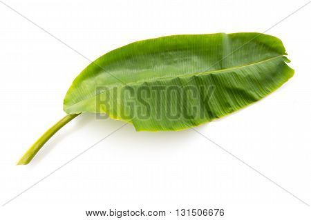 Banana leaf isolated on white background Young mild banana leaf File contains a clipping path.