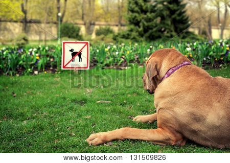 Disappointed dog next to the sign for the ban in the park