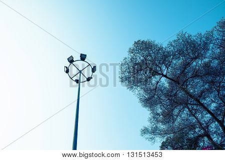 light pole with big tree, for night sports