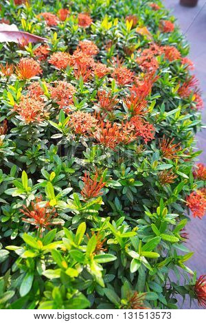 The flower spike red in public garden