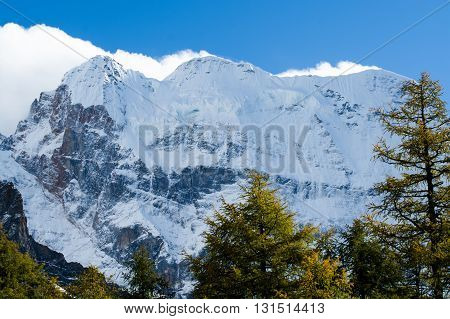 Mountain with snow and pine forest in a sunshine day of autumn Yading Sichuan China