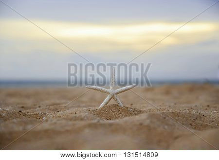 Closeup starfish on the beach and twilight sunset