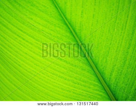 Green leaf texture with selective focus for background