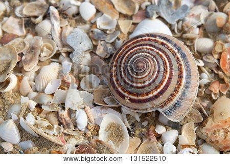 Shell in beach, pranburi, Prachuap Khiri Khan,Thailand