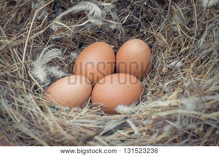 Egg in a nest waiting to hatch