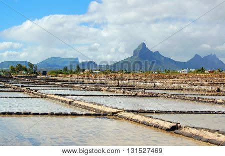 Salt plants with mountain peak in the background, Tamarin, Mauritius
