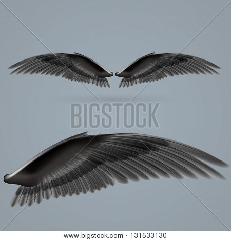Inspiring wings black colour drawn separately on a gray background