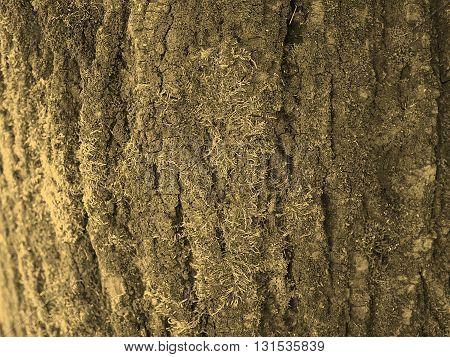 Tree Bark Background Sepia