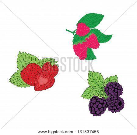 set of berries. raspberries, blackberries, strawberries. vector illustration.