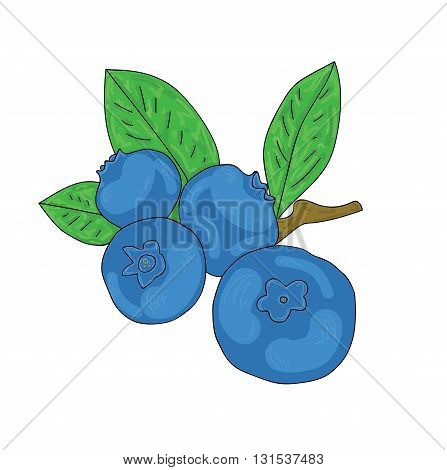 ripe fresh blueberries on a white background