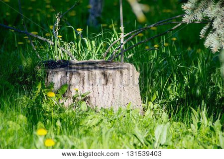 Stump among trees and flower in summer