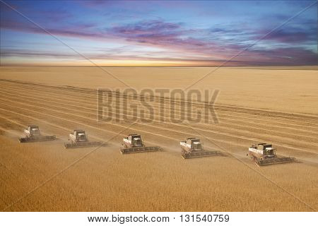 Combine harvesters at sunset, wheat field, Panorama