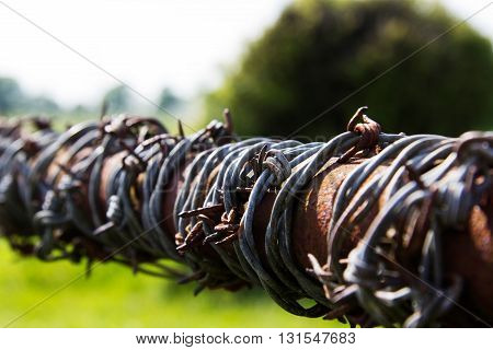 Close up of barbed wire on a farm gate