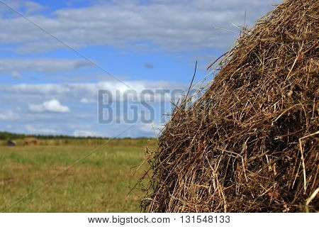 Close view of a stack of dry straw and a blue sky
