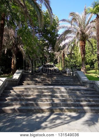 beautiful stairs in the parkland rising to the top among the trees, Sochi city