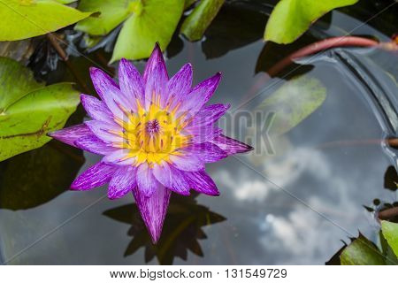 Pink Lotus Flower And Lotus Leaf Background