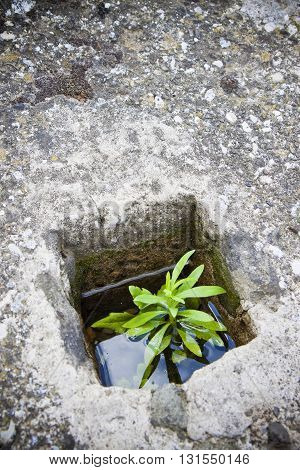 A small plant was born in an improbable place - The power of life - concept image