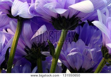 Bouquet Of White And Purple Flower