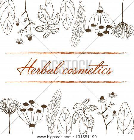 Hand drawn vector illustration of herbal cosmetics