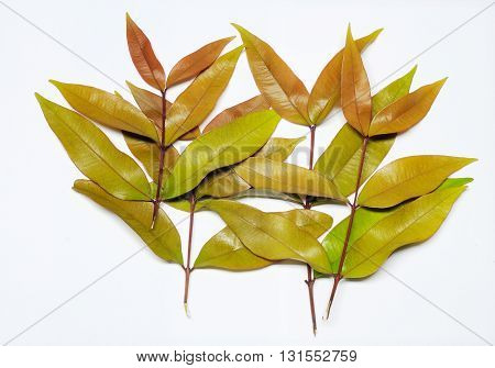a set of brown green leaves vein isolated on white background
