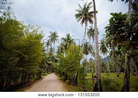 Flora on tropical island Koh Phangan in Thailand. Nature on Chalokum beach.
