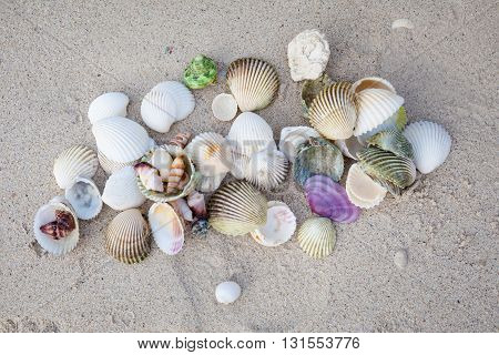 Selection of colorful shells on tropical island Koh Phangan in Thailand. Chalokum beach.