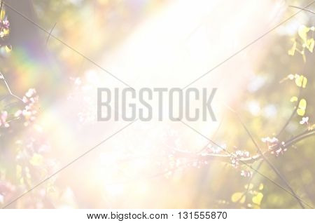 Light burst among trees. Rays of the sun in the garden. The bright sunlight between the forest branches. tree leafs and flowers at under sun rays.