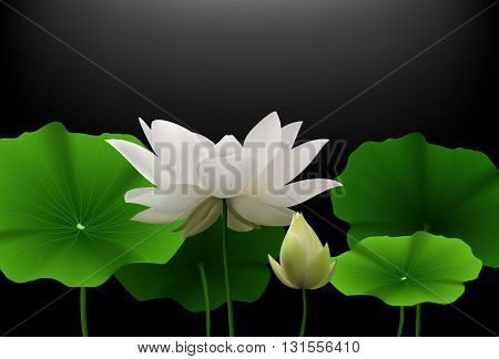 Vector illustration of White Lotus flower with green leaves on black background