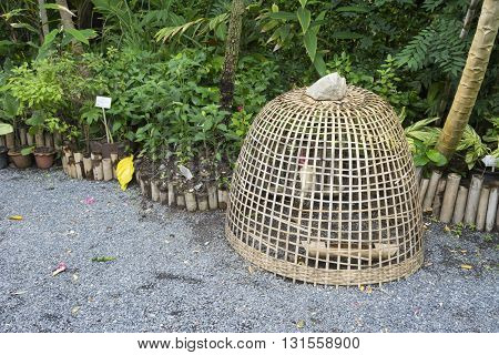 chicken coop thai style with gamecock in the garden