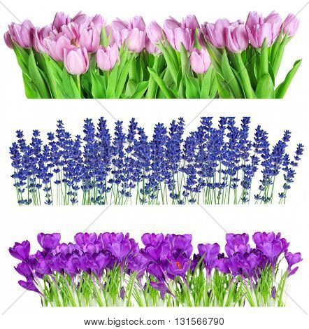Collage of beautiful summer flowers in rows, isolated on white